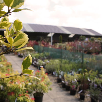 Owl Lane Nurseries - Plantaria